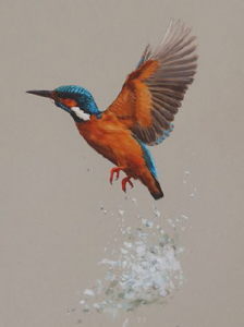 Kingfisher/ Images/Paintings/Art