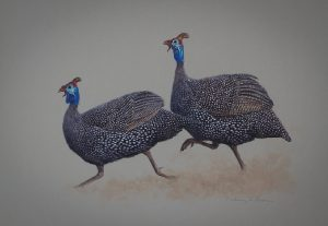 Helmeted Guinea Fowl/ Images/Paintings/Art