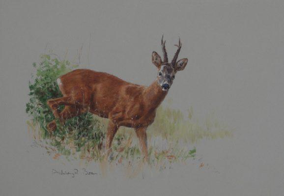 Roe Deer/ Buck/ Stalking/ Hunting/ Images/Paintings/Art Rehbock/ Jagd/ Kunst/ Bild/ Gemälde