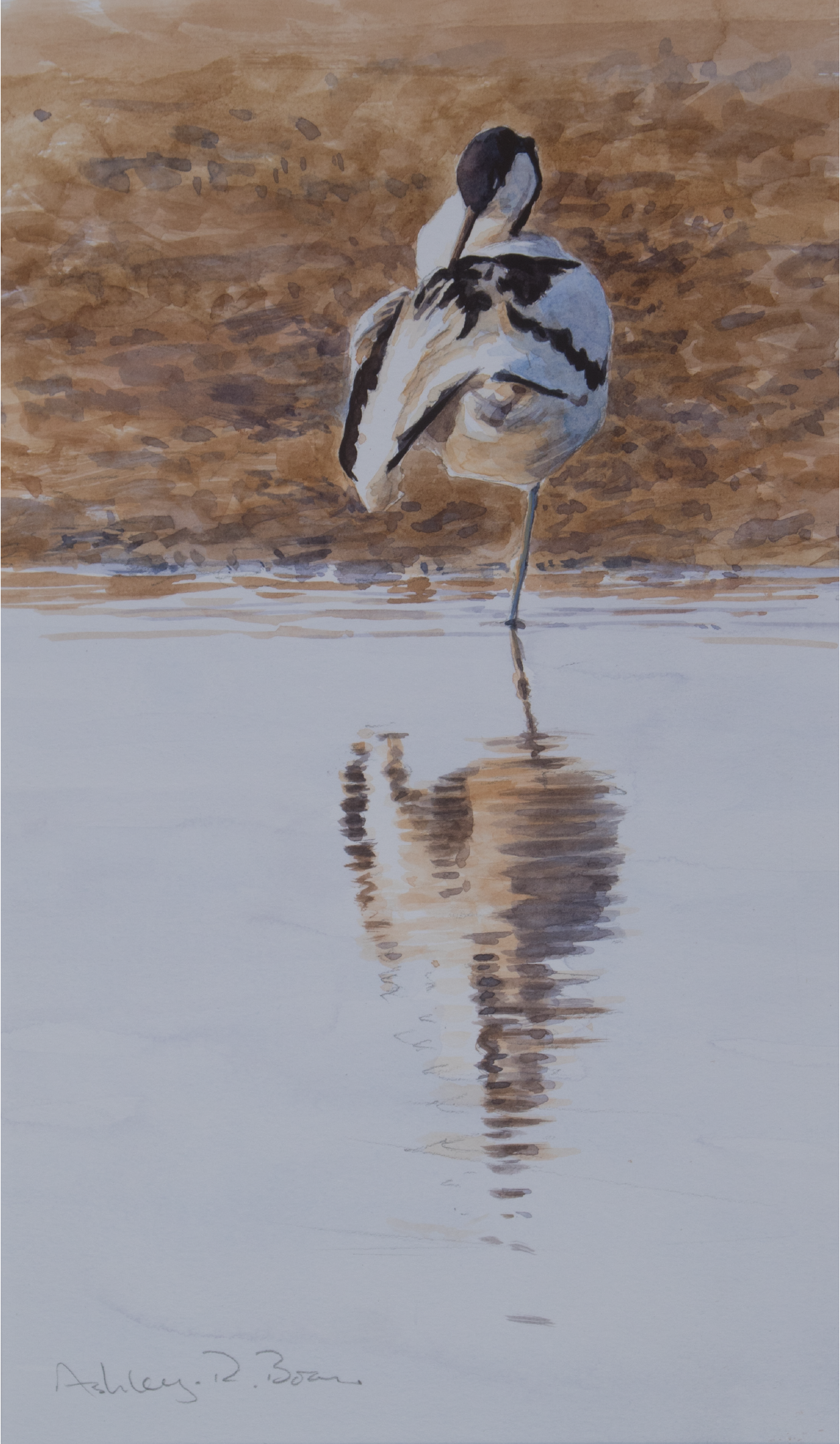 Avocet Sketch, Norfolk | Ashley Boon | Wildlife Artist