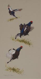Lekking Blackgrouse | Ashley Boon | Wildlife Artist