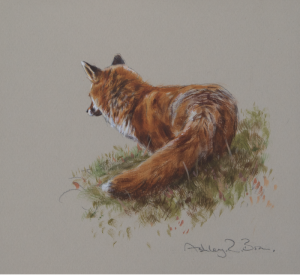 Moorland Fox Watercolour Painting | Ashley Boon | Wildlife Artist