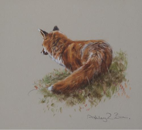 Moorland Fox Watercolour Painting | Ashley Boon | Wildlife Artist
