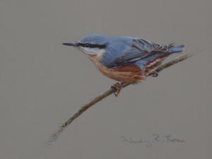Nuthatch Study | Ashley Boon | Award Winning Wildlife Artist