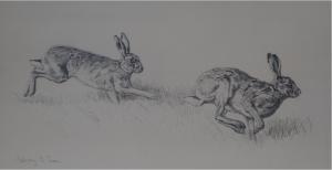 Brown Hare/ Images/Paintings/Art Hase/ Kunst/ Bild/ Gemälde
