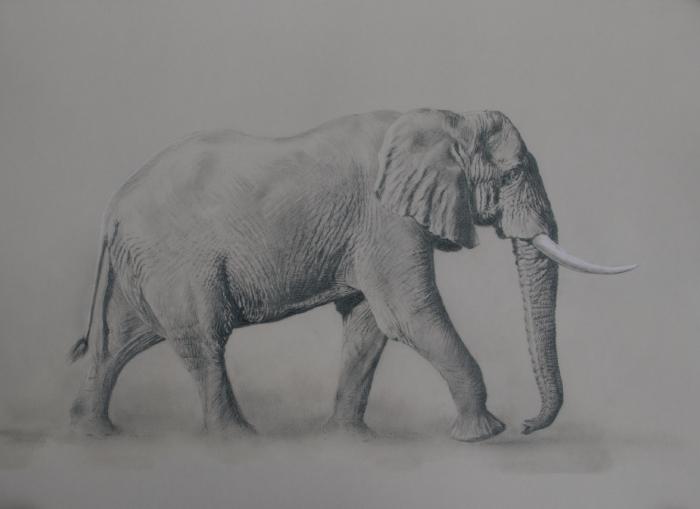 Africa Elephant Images/Paintings/Art Afrikanischer Elefant Kunst/ Bild/ Gemälde