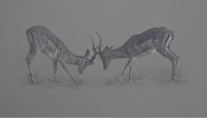 Impala Rams | Ashley Boon | Wildlife Artist