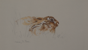 Resting Hare | Ashley Boon | Award Winning Wildlife Artist