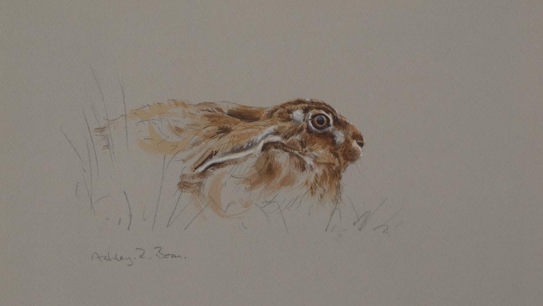 Resting Hare | Ashley Boon | Award Winning Wildlife Artist