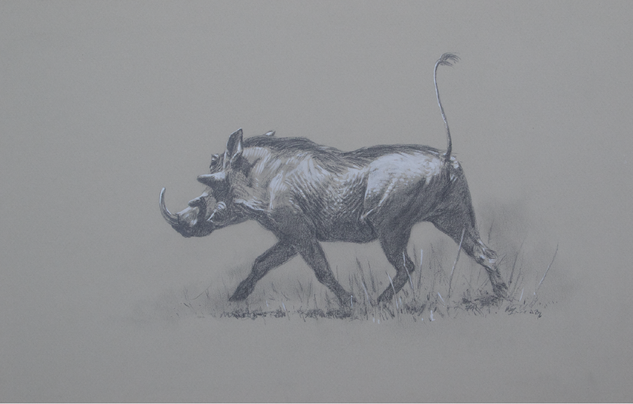 Trotting Warthog | Wildlife Artist | Ashley Boon
