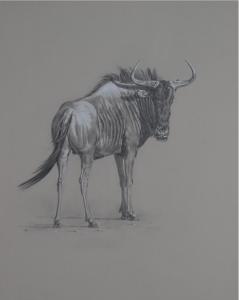 Blue Wildebeest/ Images/Paintings/Art Streifengnu Bulle/ Kunst/ Bild/ Gemälde
