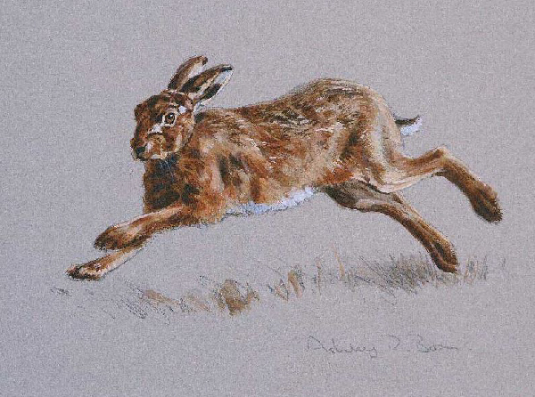 Brown Hare/ Images/Paintings/Art Hase/ Kunst/ Bild/ Gemälde