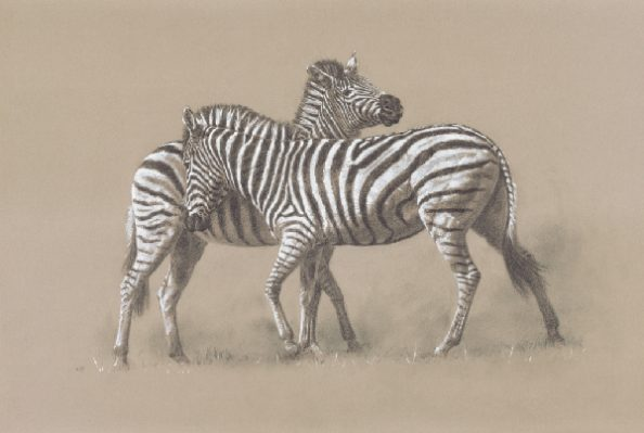 Burchell's Zebra/ Images/Paintings/Art Burchell's Zebra/ Kunst/ Bild/ Gemälde