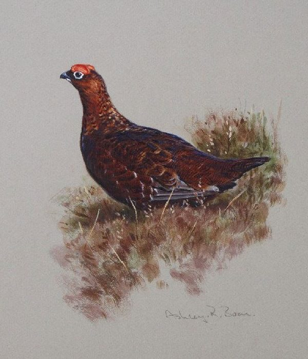 Ashley Boon Wildlife & Sporting Artist Wildlife Art/ Paintings/Images Bird Paintings/Art/Images Animal Paintings/Art/Images British Wildlife British Birds