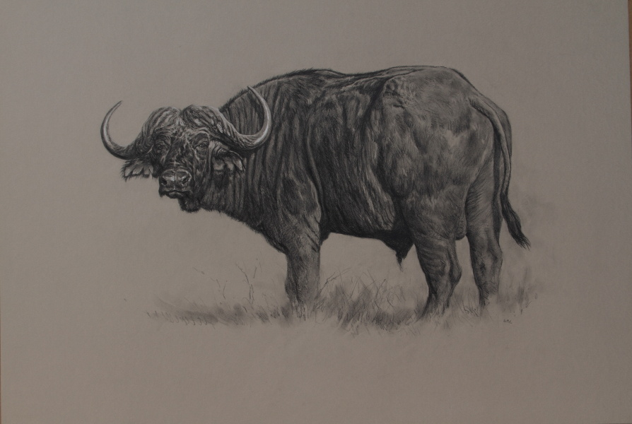 Cape Buffalo Paintings/Art/Images Kaffernbüffelbullen/ Kunst/ Bild/ Gemälde
