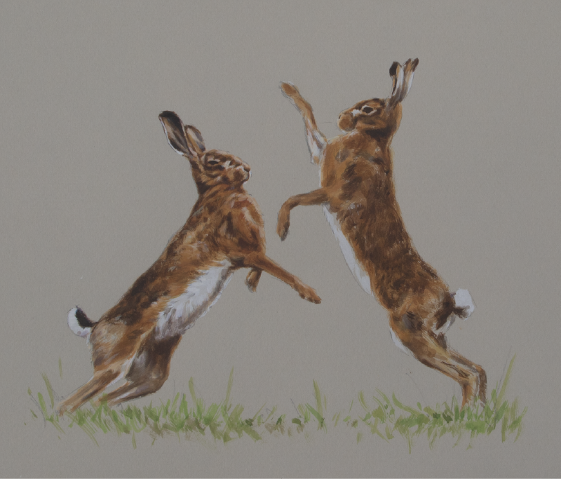 Boxing Hares Watercolour Painting | Ashley Boon | Wildlife Artist