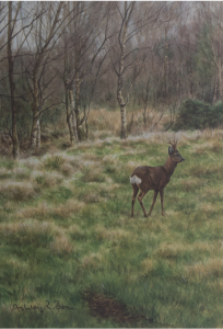 Ashley Boon Wildlife & Sporting Artist Wildlife Art/ Paintings/Images Bird Paintings/Art/Images Animal Paintings/Art/Images British Wildlife