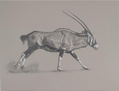 Running Gemsbok | Ashley Boon | Wildlife Artist | Big Game Hunting