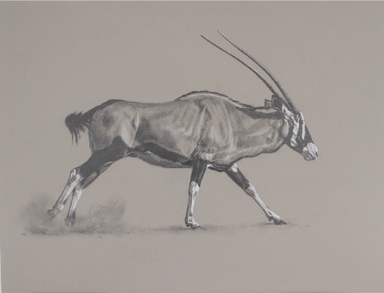 Running Gemsbok | Ashley Boon | Wildlife Artist | Big Game Hunting
