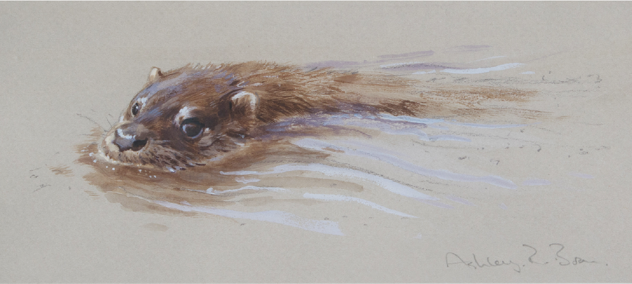 Otter/ Images/Paintings/Art