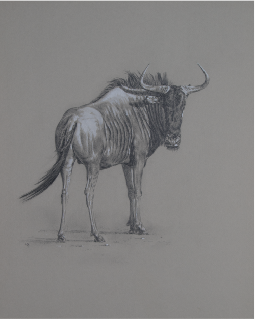 Blue Wildebeest/ Images/Paintings/Art Streifengnu Bulle/ Kunst/ Bild/ Gemälde